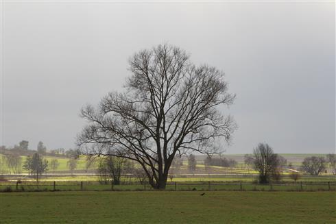 Seine Majestät der Baum