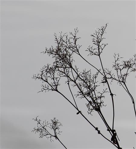 Wintergrau - Grafik