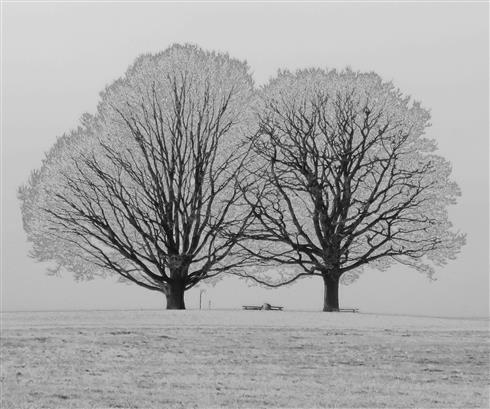 Frostwelt