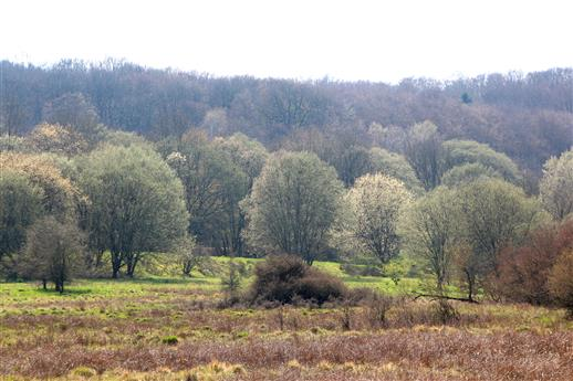 Wald-Frühling I