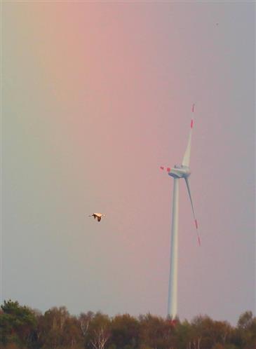Regenbogen, Windrad, Kranich