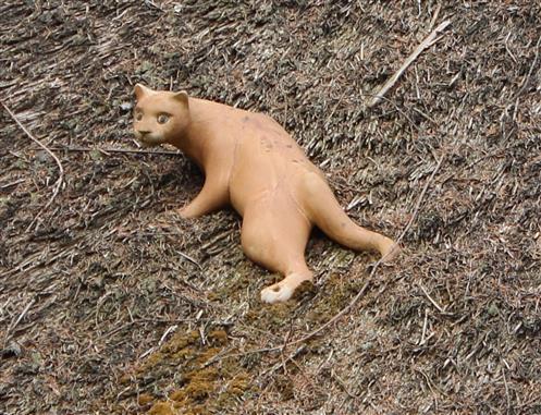 Die Katze auf dem kalten Reetdach