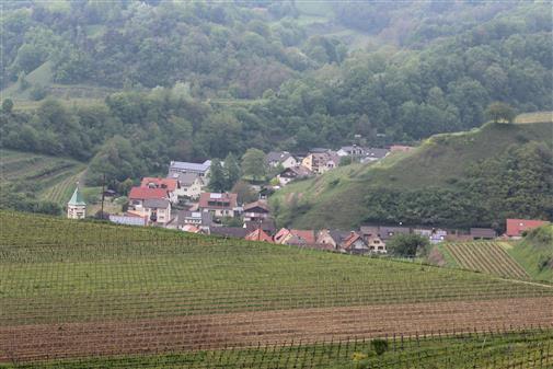 Blick vom Badberg auf Schelingen