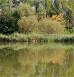 Herbststimmung gespiegelt