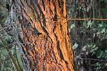 Morgensonne streichelt Baum