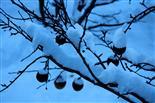 Schnee - Raupen