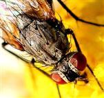 Kleine Fliege ganz groß