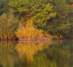 Herbst am Erlensee
