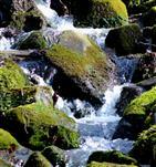 Urszene Wasser - Stein - Moos