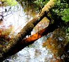 Spiegelung im Roten Wasser