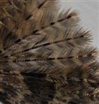 Flügel der Federmotte (Alucita dodecadactyla)