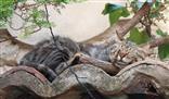 Die Katze auf dem kühlen Steindach
