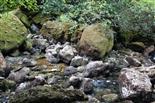 Quellbereich der Sorgue bei Niedrigwasser