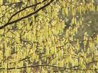 Pollenquelle - des Einen Freud', des Andern Leid...