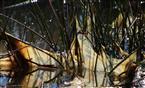 Algen - Paravent