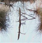Wasserzeichen I