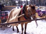 Pferdeschlitten auf der seiser alm