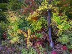 Goldener Oktober im Wald.